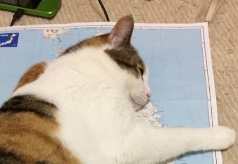 猫 東北地方に上陸 ノースちゃん