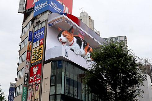 新宿のネコ