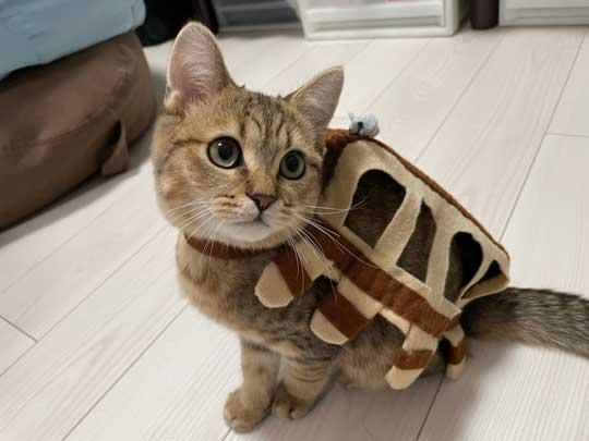 絵本 ライオン イカ耳 猫 メガネ ミヌエット みにら