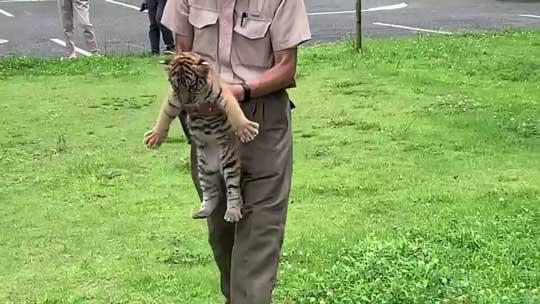 トラ 赤ちゃん 秋吉台 サファリランド