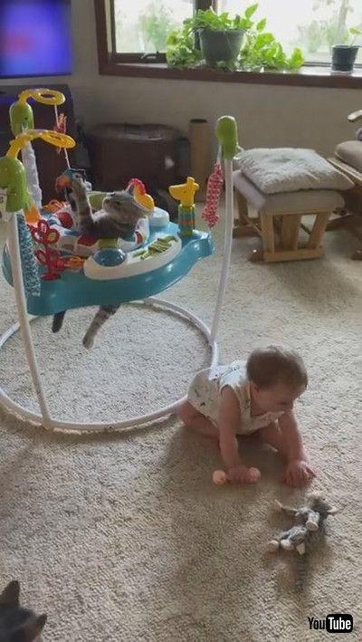 「Cute Kitty Plays in Baby Bouncer || ViralHog」