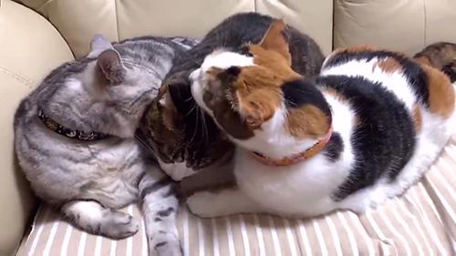 いわたり猫ちゃん2
