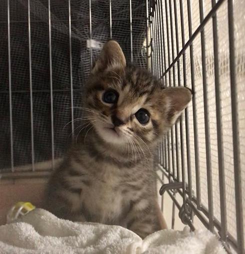 しぴ(ソマリ)と、突然現れた保護猫ちゃんの記録