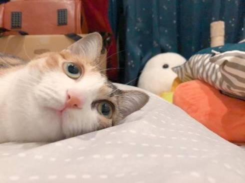 猫 こよりちゃん 何も考えてない顔