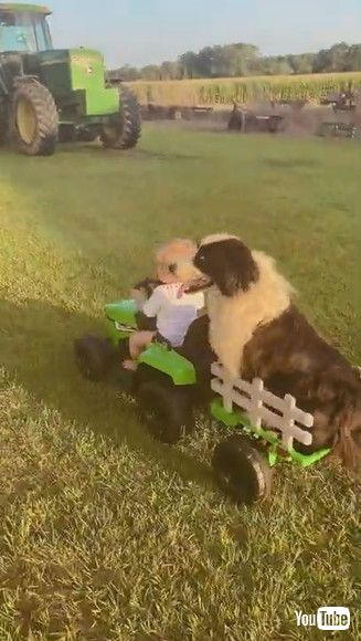 「Boy and His Dog Ride Around in Toy Tractor    ViralHog」
