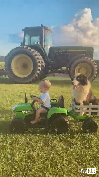 「Boy and His Dog Ride Around in Toy Tractor || ViralHog」