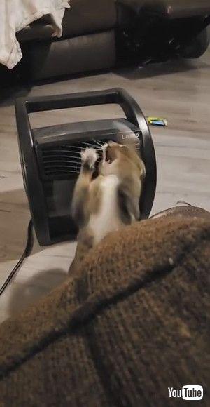 「Cat Battles Cold Airflow || ViralHog」