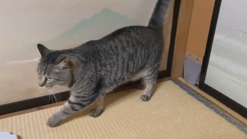 ドゥルンと出てくる猫ちゃん