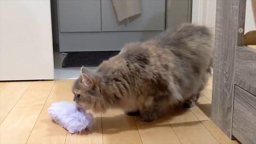 子猫とかんちがい