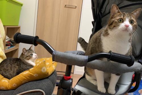 三輪車に乗るうなぎちゃん