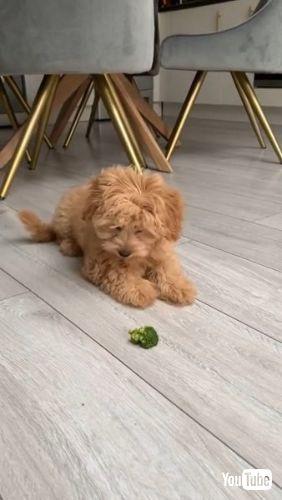 Battles Broccoli