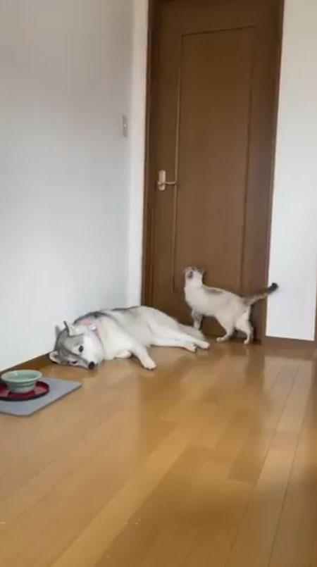 ドアに狙いを定める猫ちゃん