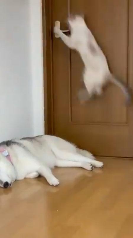 猫ちゃんジャンプ