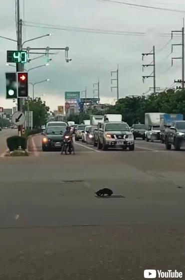 今にも車にひかれそうな猫が救出される