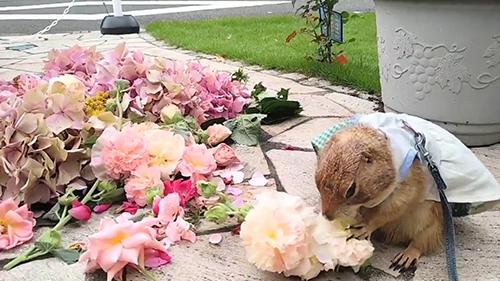 花を食べるブイくん