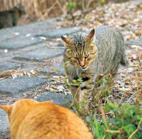 イキってるネコ 猫 写真 沖昌之