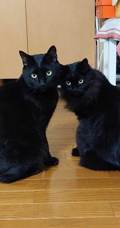 新宿 巨大ネコ 再現 飛び出して見える ミニチュア 黒猫 本物