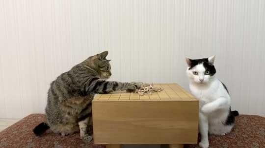 ねこナビ編集部 猫と将棋崩し