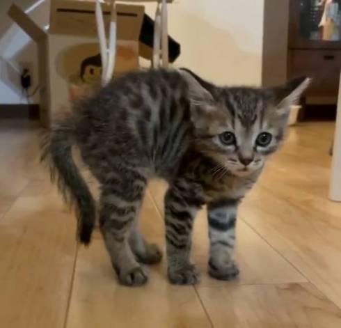 イキリ猫 チップちゃん イキリまくる