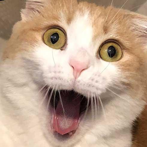 洗濯カゴ 入っていたのがバレた 猫 表情 あくび