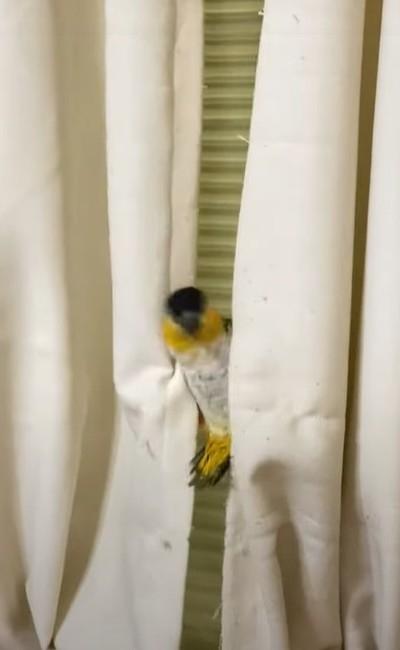 アクロバティックな鳥さん