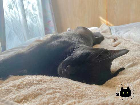 黒猫 ろん 寝る場所 分けあう 絵日記 漫画