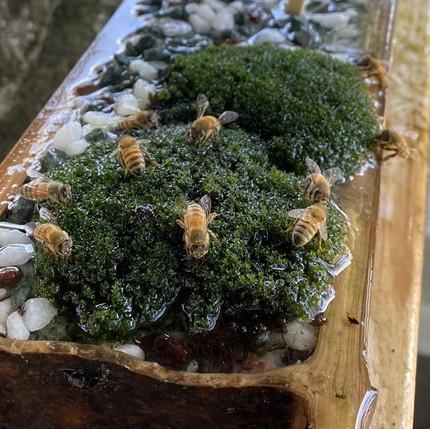ミツバチさんたち