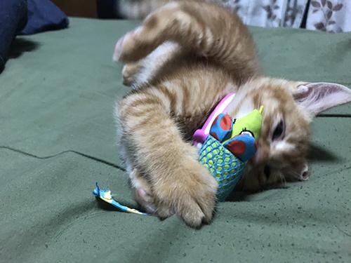 夢中になって遊ぶ子猫