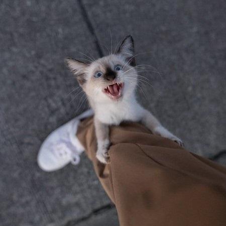 足にしがみついてきた猫ちゃん
