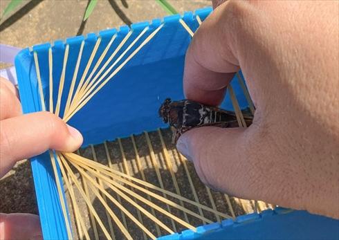 虫かご 3Dプリンター