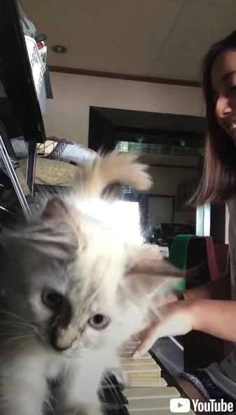 ピアノをひく指にじゃれる子猫