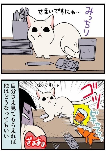 人懐こい新入り猫ちゃん