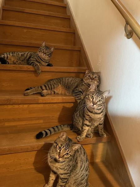 キッチンを占拠する猫ちゃんたち