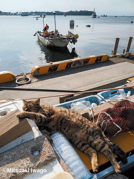 漁港の猫ちゃん