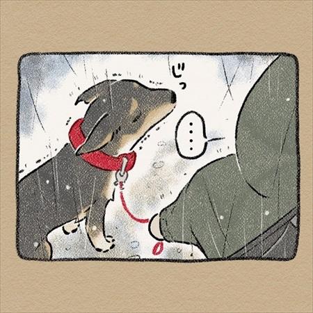 雨雲レーダーを信じて犬の散歩に出たら