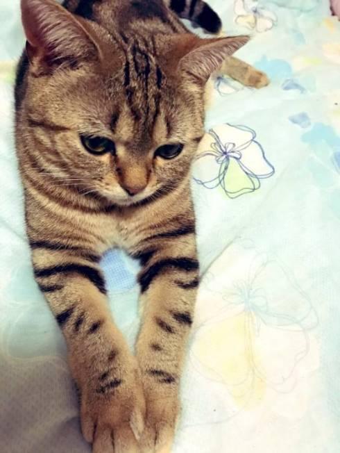 猫 あーちゃん ちゅーる 焦らされた