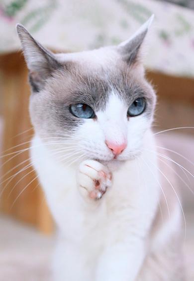 忍者猫チャコたん&すず香さん