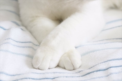 ボヨンボヨンの猫ちゃん
