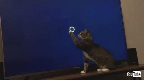 「Sweet Kitty Plays with Loading Screen    ViralHog」