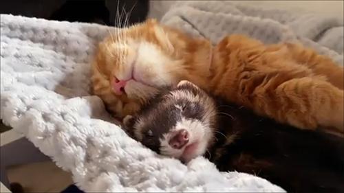 眠る2匹アップ