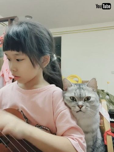 「Cat Oversees Music Practice || ViralHog」