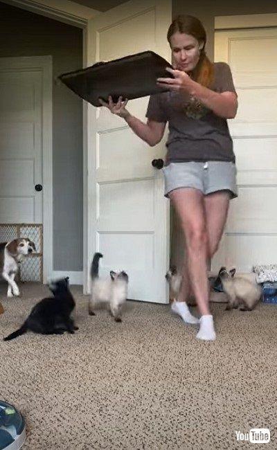 ゴハンに飛びつく子猫たち