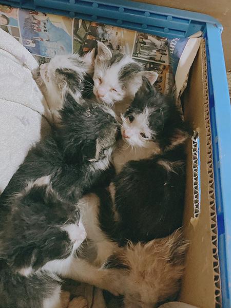 子猫たちアップ