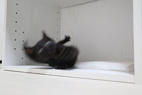 すべってころびゆく黒猫