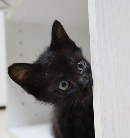 のぞきみ黒猫