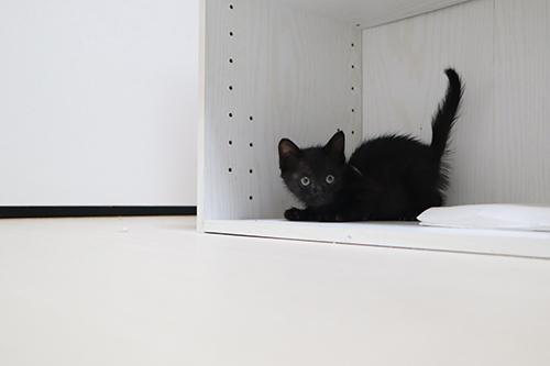 いつもの黒猫