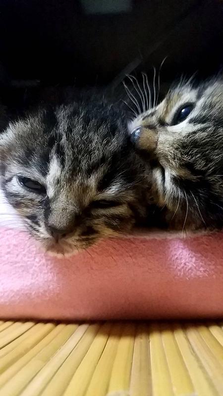 保護された猫2匹