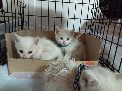 保護された白猫