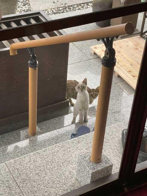 猫 見慣れない 参拝客 妙見山上原寺