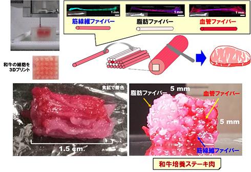 「和牛肉の筋・脂肪・血管の線維組織ファイバーを3Dプリント」 新技術で和牛培養ステーキ肉のサシ再現に期待